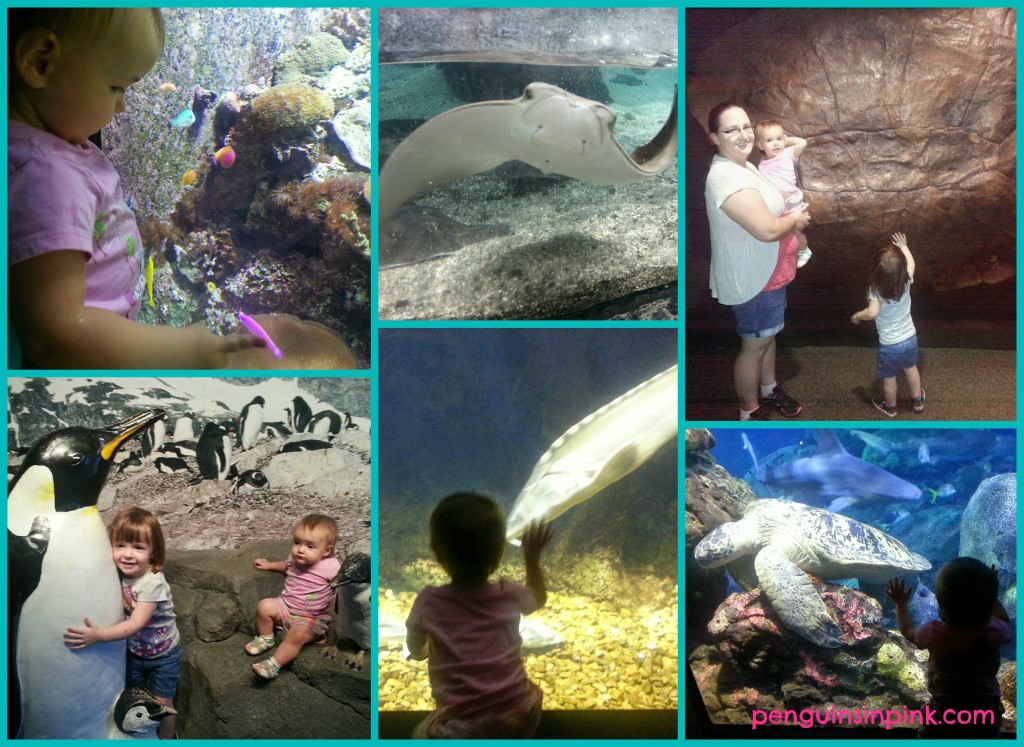 Tennessee Aquarium fun while in Tennessee