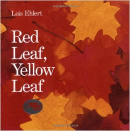 Red Leaf, Yellow Leaf by Lois Ehlert
